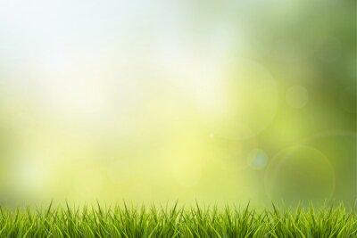 Sticker Grass and green nature blurred background