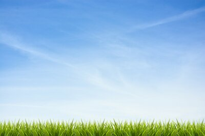 Sticker Grass grass under blue sky and clouds