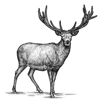 Sticker Gravure de cerfs illustration