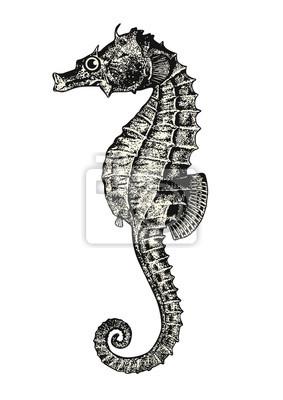 Gravure Dessin Animal Vintage Hippocampe Ou Hippocampe élément