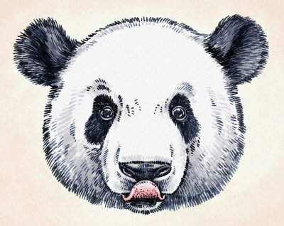 Sticker Gravure encreur dessin panda illustration