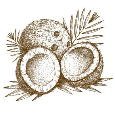 Sticker Gravure illustration de noix de coco et de feuilles de palmier