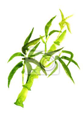 Green bamboo isolé