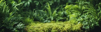 Sticker Green fern leaf texture, nature background, tropical leaf