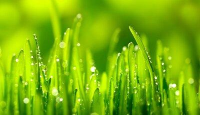 Sticker Green Grass