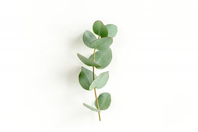 Sticker Green leaves eucalyptus isolated on white background. Flat lay, top view.