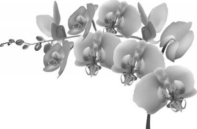 Sticker gris orchidée branche sur fond blanc