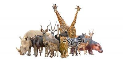 Sticker groupe d'animaux afrique