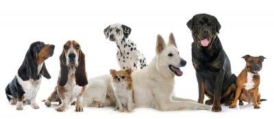 Sticker Groupe de chiens