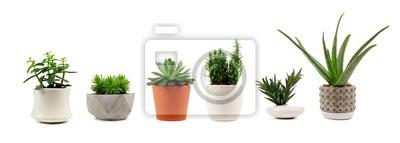 Sticker Groupe de divers cactus d'intérieur et plantes succulentes dans des pots isolés sur fond blanc