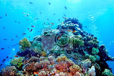 Sticker Groupe de l'eau de poissons coralliens.