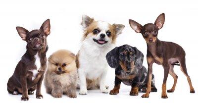 Sticker Groupe, petit, décoratif, chien, compagnons