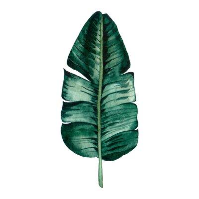 Sticker Hand drawn watercolor tropical plants set. Exotic palm leaves, jungle tree, brazil tropic botany elements.