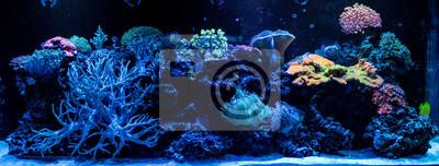 Sticker hard coral macro in aquarium