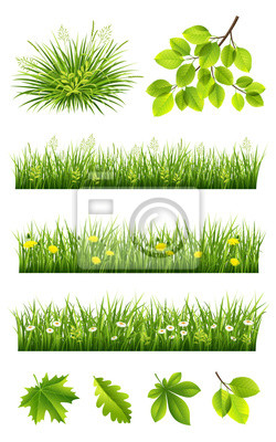 Herbe, feuilles, collection