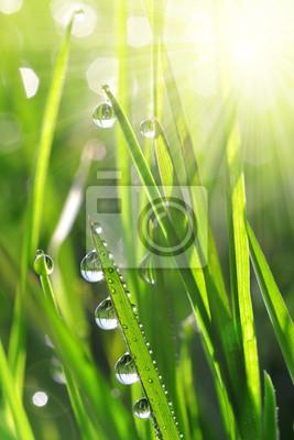 Herbe verte fraîche avec des gouttes d'eau closeup. Mise au point douce. Contexte de la nature