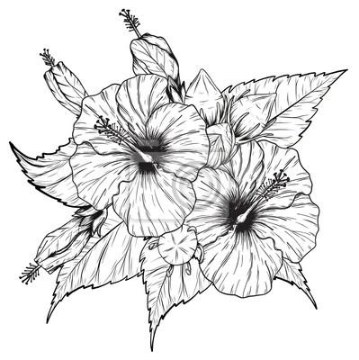 Fleur dessin images - Dessin hibiscus ...