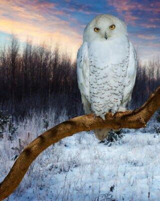 Sticker Hibou, neigeux, pendant, coucher soleil