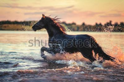 Sticker Horse