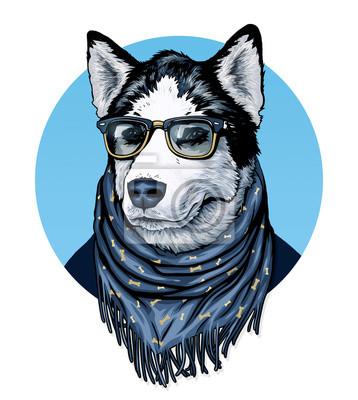 Husky. Chien portant des lunettes et une écharpe.