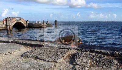 Iguana sur la plage