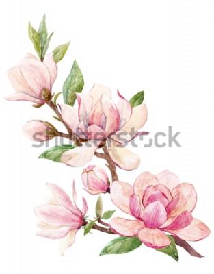 Sticker Illustration aquarelle d'une branche avec carte de printemps fleur rose Magnolia fleurs