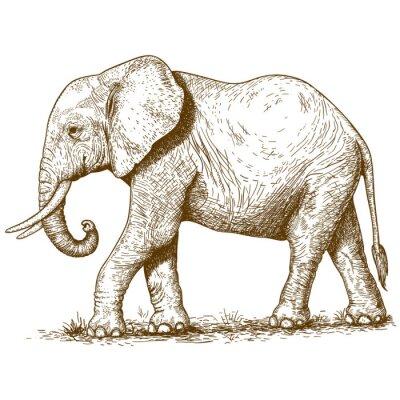 Sticker illustration vectorielle de la gravure éléphant