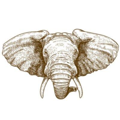 Sticker illustration vectorielle de la tête gravure d'éléphant