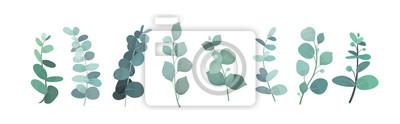 Sticker Illustration vectorielle de verdure d'eucalyptus argent, feuilles et branches pour la décoration de cartes de vœux et d'invitations. décoratives belles branches vertes élégantes dans un style plat.