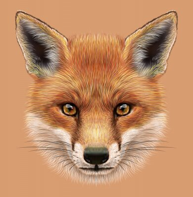 Sticker Illustrative portrait d'un renard rouge. Le visage mignon pelucheux de la forêt Fox.