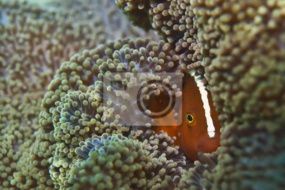 Isolé poisson portrait de clown tout en vous regardant