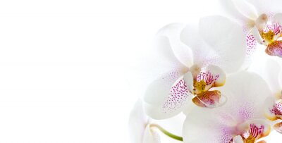 Sticker isolierte Orchideenblüten