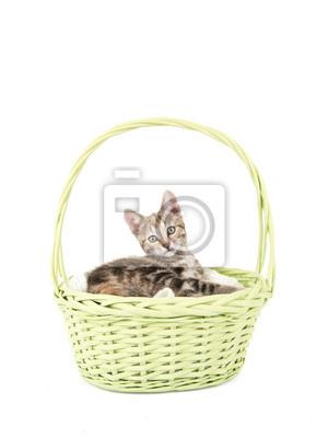 jonge cyperse kat in een groen rieten mandje tegen een witte
