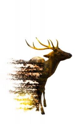 Sticker Journée mondiale de la vie sauvage Concepts environnementaux et fauniques