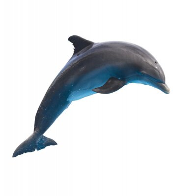 Sticker Jumping Dolphin sur blanc