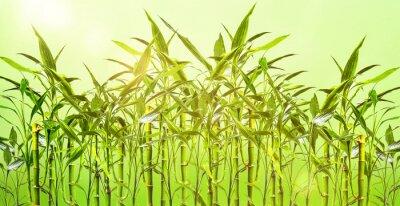 Sticker Junge Bambuspflanzen vor grünem Hintergrund