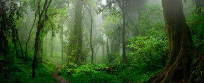 Sticker Jungles tropicales profondes de l'Asie du sud-est en août
