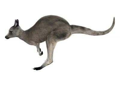 Sticker Kangourou gris orientale