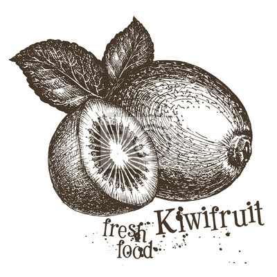 kiwi logo vectoriel modèle de conception. fruits frais, de la nourriture ou de la récolte