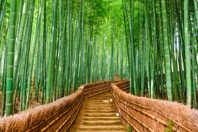 Sticker Kyoto, Japon Forêt de bambou