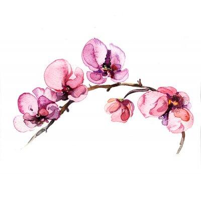 Sticker l'aquarelle fleurs d'orchidée isolé sur le fond blanc