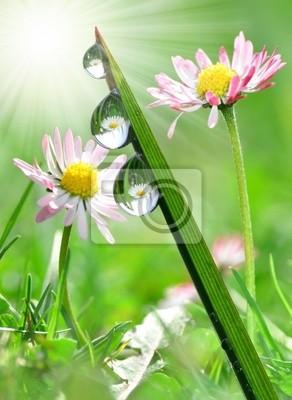 L'herbe fraîche avec des gouttes de rosée dans le fond des marguerites
