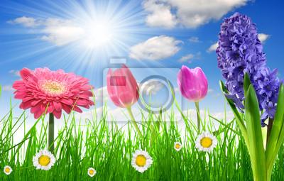 L'herbe fraîche de printemps avec la fleur sur le ciel bleu