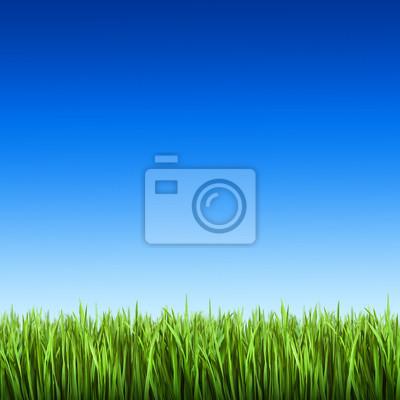 L'herbe sur le fond de ciel bleu