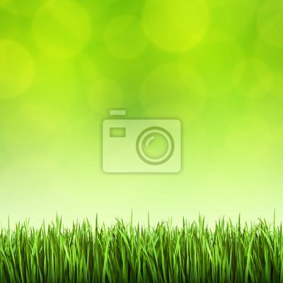 L'herbe sur le fond vert