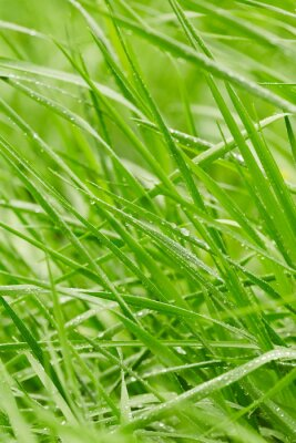 Sticker L'herbe verte
