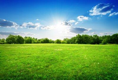 L'herbe verte et les arbres