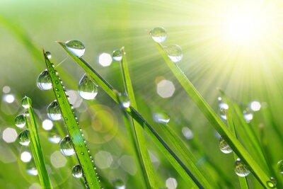 L'herbe verte fraîche avec des gouttes de rosée agrandi. Nature Background