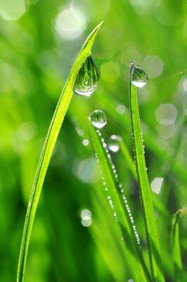 Sticker L'herbe verte fraîche avec des gouttes de rosée agrandi. Nature Background