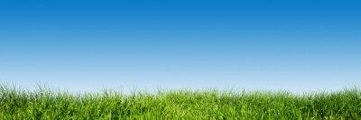 Sticker L'herbe verte sur fond de ciel bleu clair, le thème de la nature au printemps. Panorama